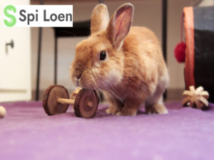 Photo Lapin